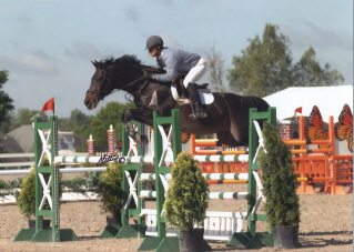 TZIGANE, OSB Trakehner stallion showing in Level 4 high Jumping class in 2006, with Helmut Schrantz up
