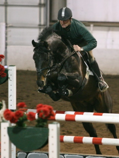 TZIGANE, OSB Trakehner stallion showing in Level 5 high Jumping class in 2007, with Helmut Schrantz up